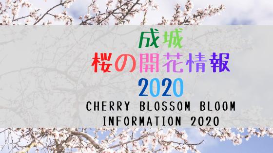 成城 桜の開花情報 2020