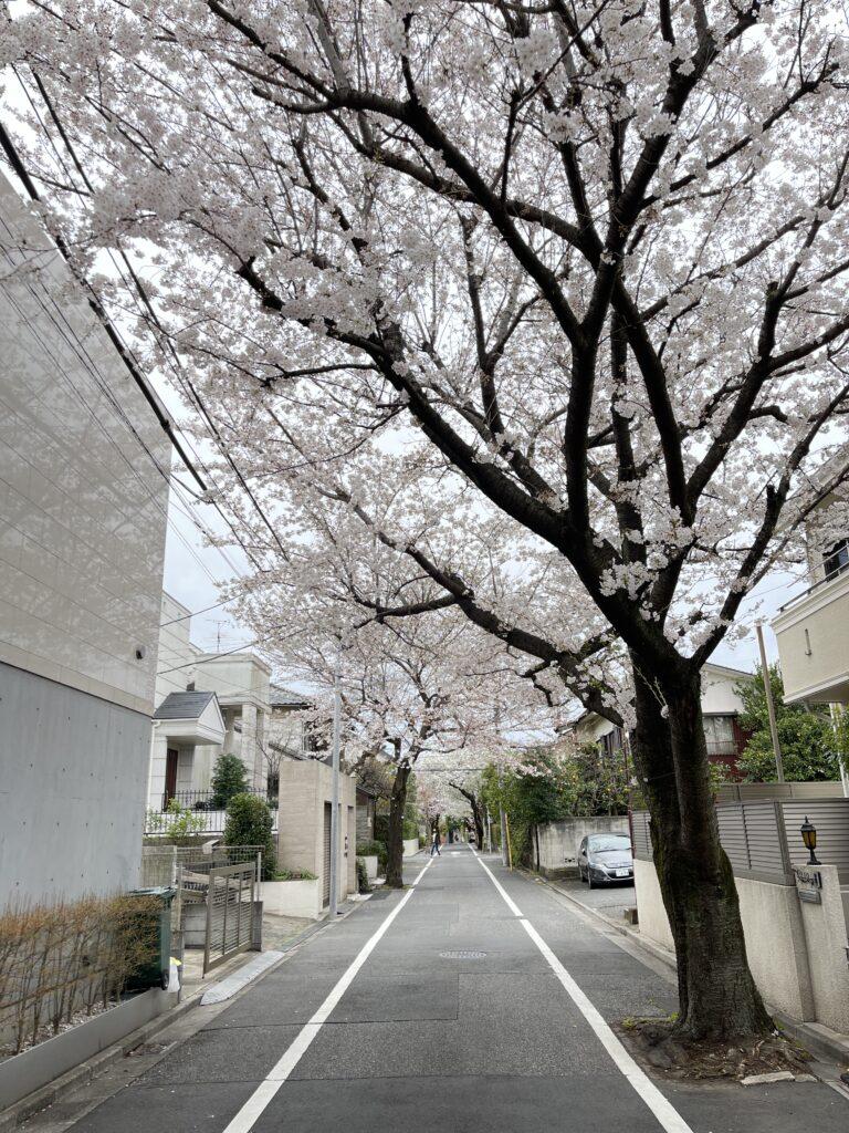 成城の桜2021